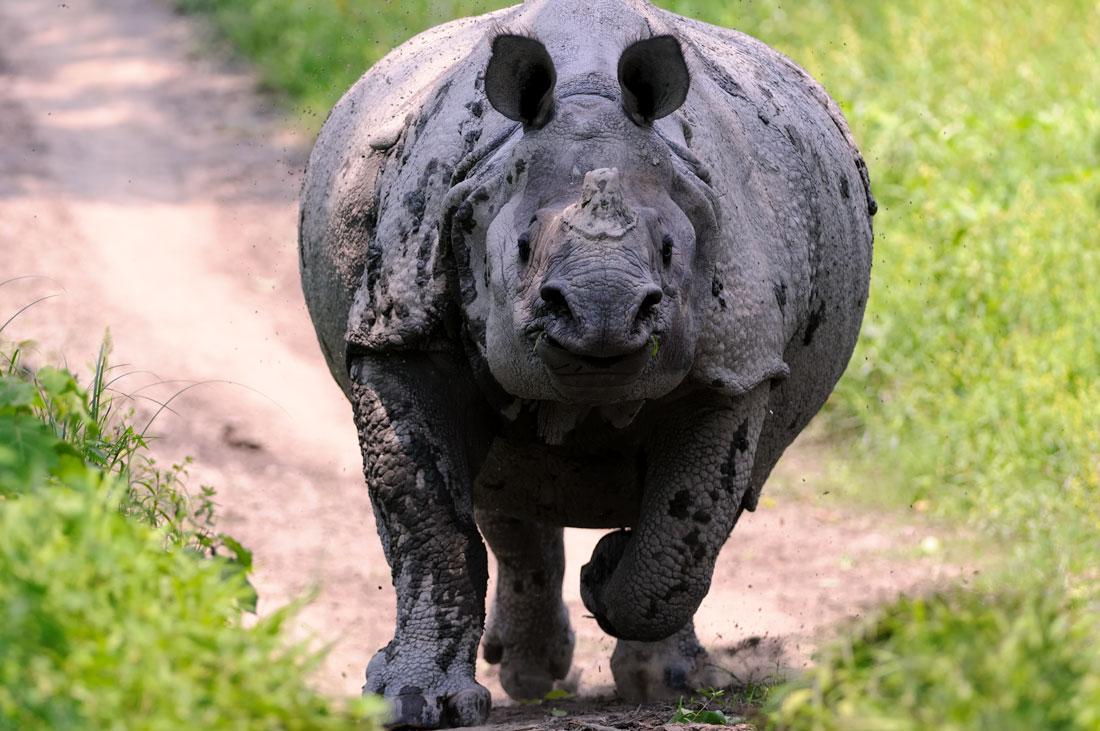 Rhino Charge Kaziranga