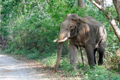 elephant corbett tour
