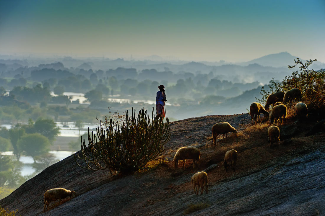 Rabaari Shepard of Bera landscape with sheep