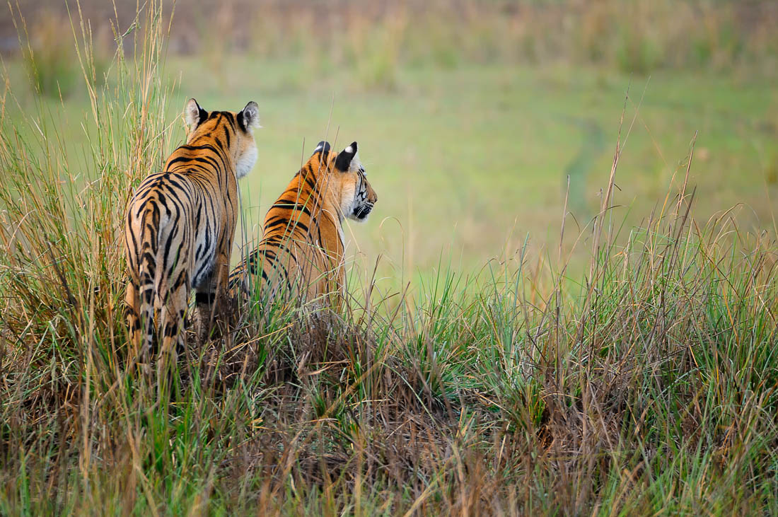 Tadoba Tiger Photography Tour