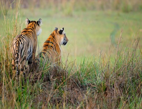Best Places for Tigers Photography